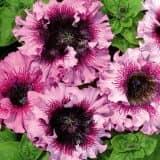 cvety 11