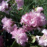 cvety 12