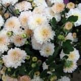 cvety 14