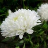 cvety 16