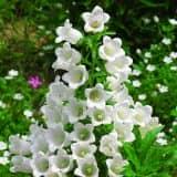 cvety 19