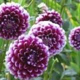 cvety 3