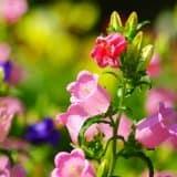 cvety 32