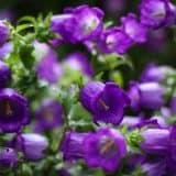 cvety 34
