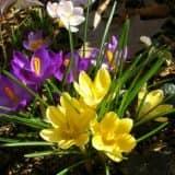 cvety 36