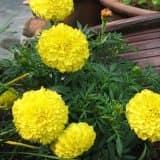 cvety 39