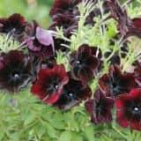 cvety 4