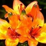 cvety 41