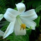 cvety 43
