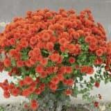cvety 44