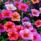 cvety 46