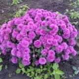 cvety 48