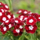 cvety 49