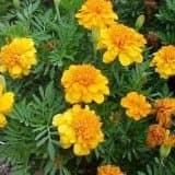 cvety 5