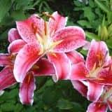 cvety 6