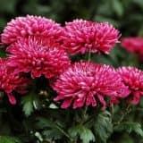 cvety 7