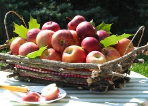 Ваза или корзина для фруктов из прутьев - делаем сами