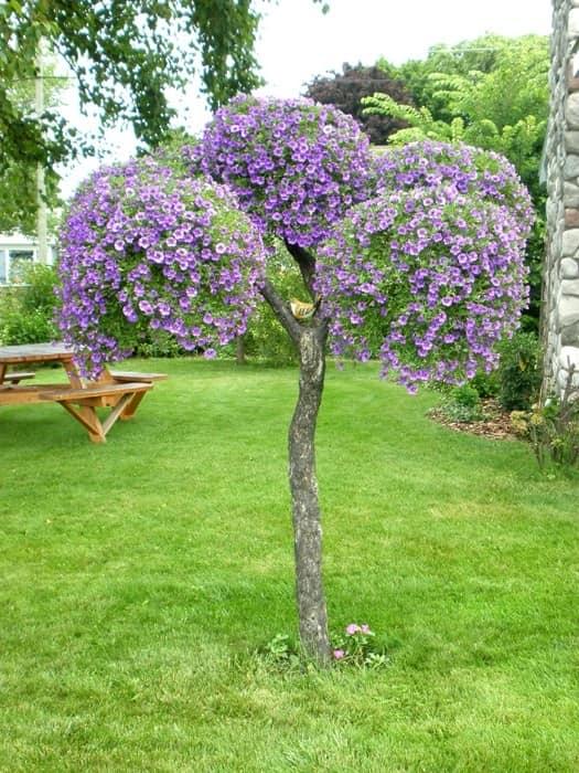 Старое садовое дерево, украшенное горшками с петуниями