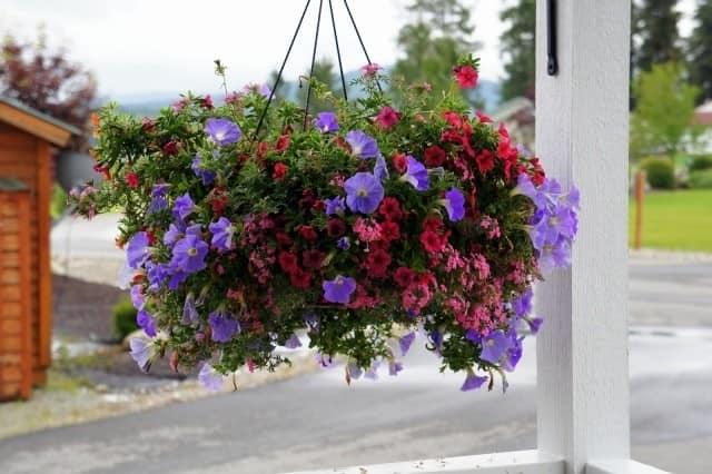 Висячая цветочная клумба