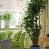 растения крупных размеров