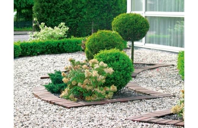 Деревья и кустарники в гравийном саду