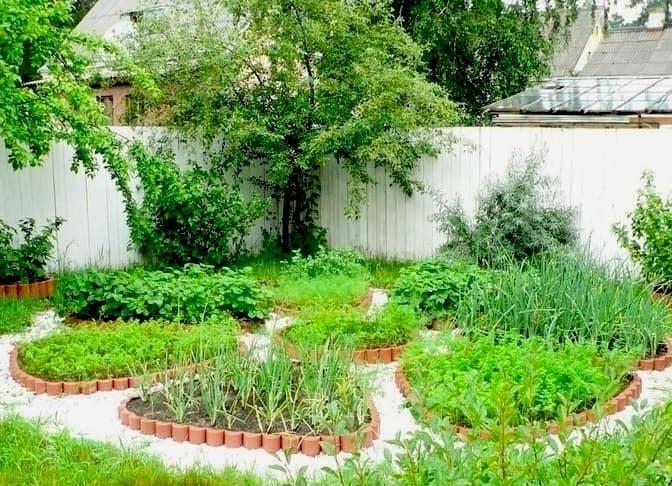 Декоративные клумбы в огороде