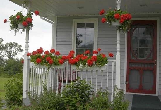 Украшение крыльца частного дома растениями