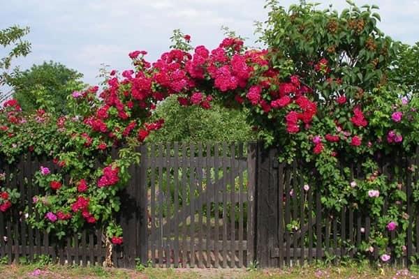 Цветочная арка при входе в сад