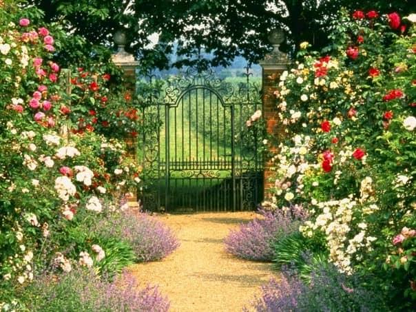 Декоративные кустарники возле садовой калитки