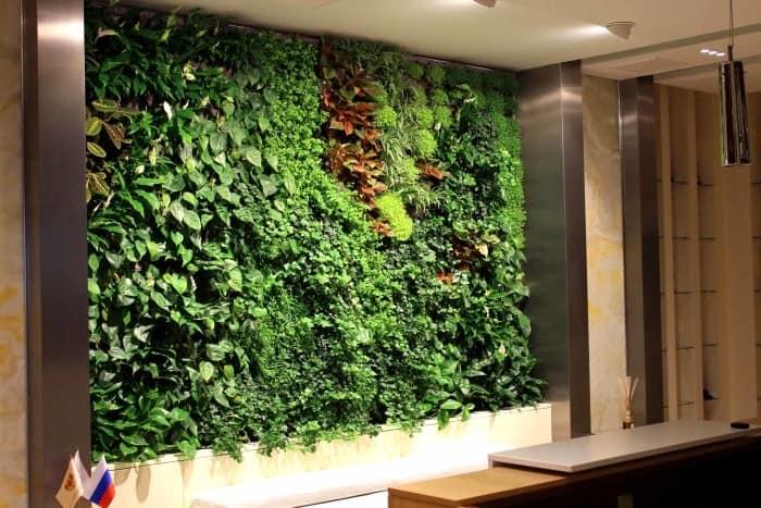 Вертикальное озеленение стен в доме и квартире
