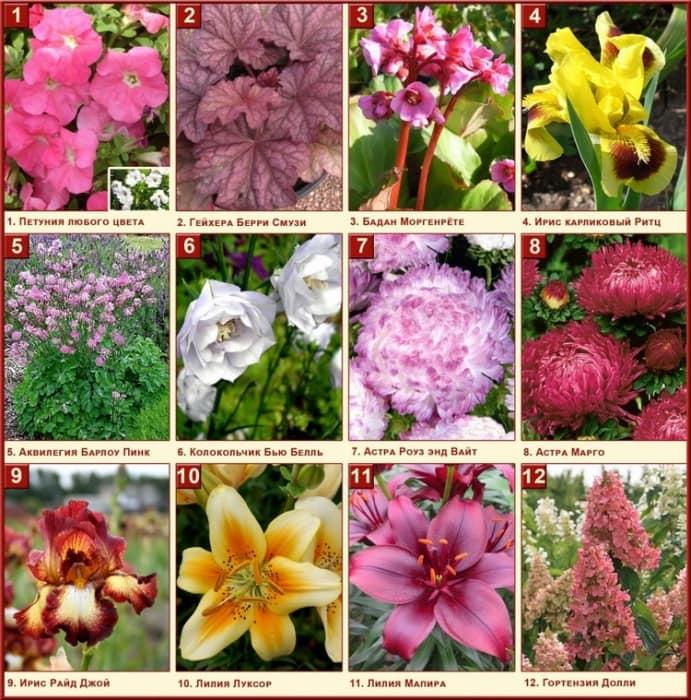 Цветы садовые список и