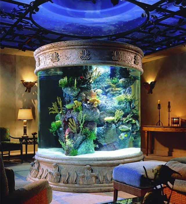 vaza-gigant-akvariym