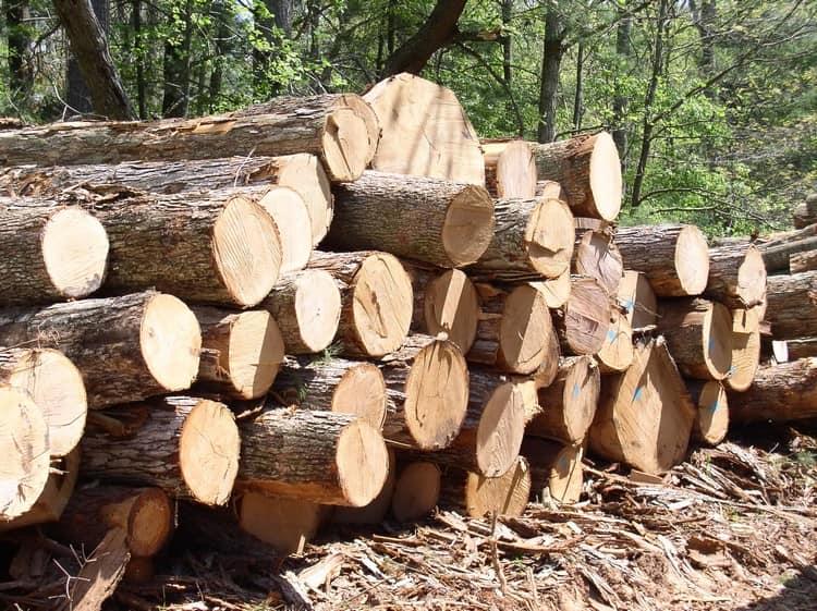 Деревья для стройки