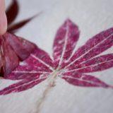 Отпечатки растений на аксессуарах в интерьере: подробные мастер-классы с фото по изготовлению эко принта