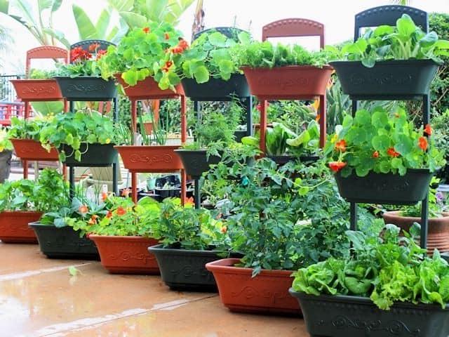 Современный огород в контейнерах