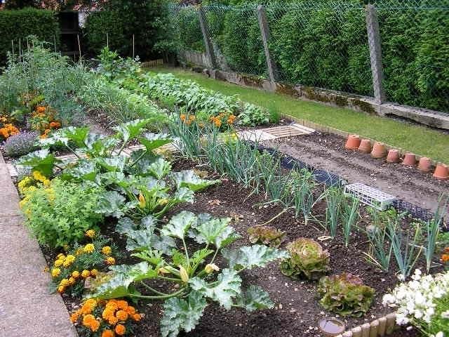 Цветочно-овощные грядки на современном огороде