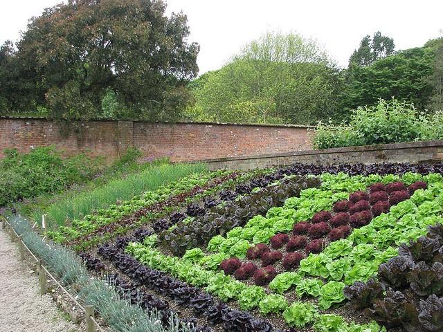 Оформление современного огорода