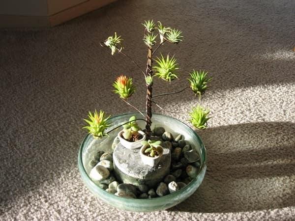 дерево из тилландсии