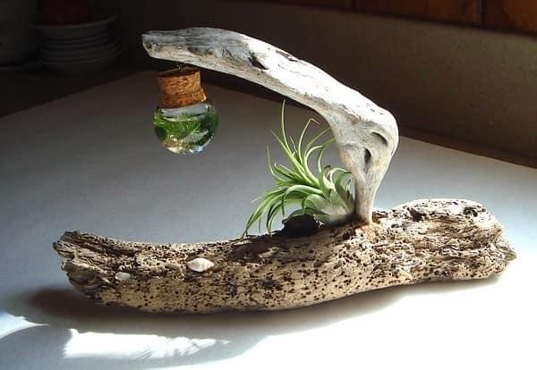 подвесные растения в коряге