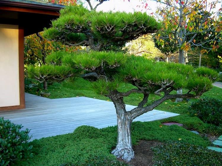 Ниваки и садовый бонсай: кусочек живой Японии в вашем саду (35 фото) 94