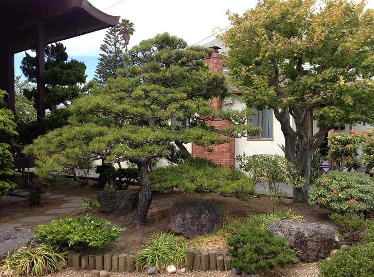 Ниваки и садовый бонсай: кусочек живой Японии в вашем саду (35 фото) 58
