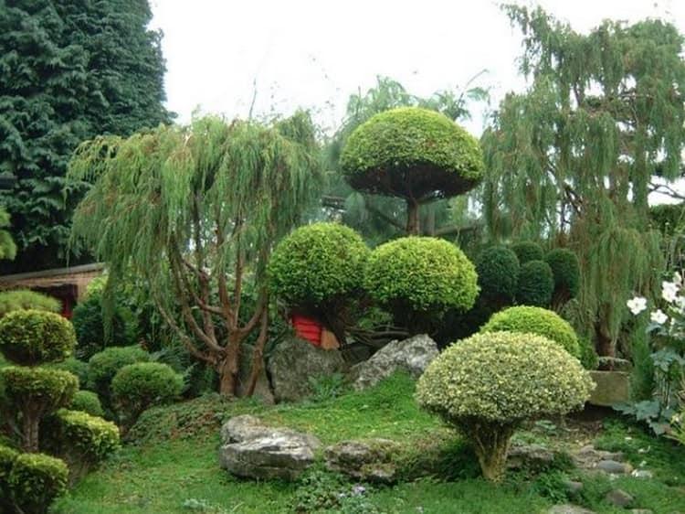 Ниваки и садовый бонсай: кусочек живой Японии в вашем саду (35 фото) 99