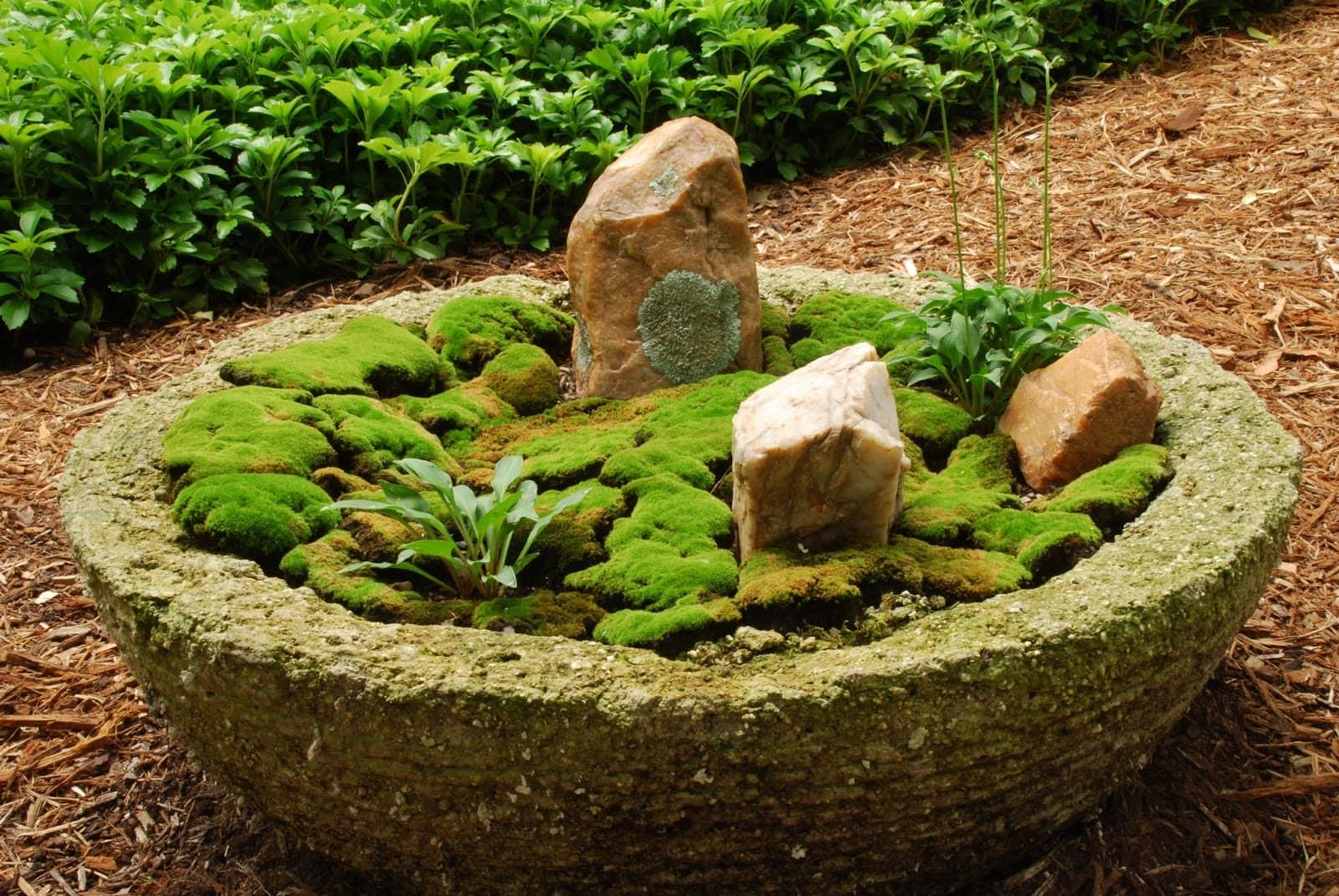 Декоративный мох в саду