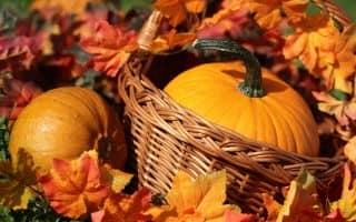 Осенняя корзина: несколько идей для поделок из природных материалов
