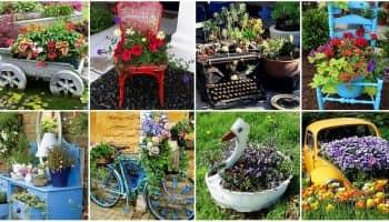 Цветы в старых вещах: необычные идеи для клумбы (40 фото)