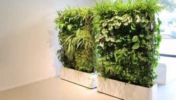 Зеленые комнатные растения в интерьере квартиры